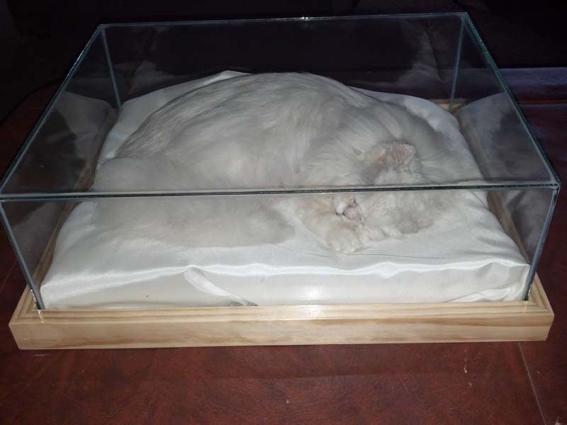 preserved pets: image 4 0f 4 thumb
